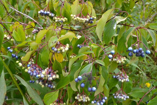 Humber Bay Park: Wild berries