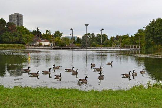 Humber Bay Park