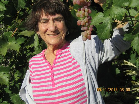 Nelson Family Vineyards: I was allowed to pick the fruit off the vine