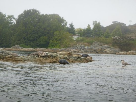 Victoria Waterfront Tours: seal island
