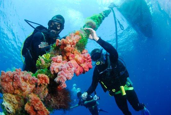 Bokissa Private Island Resort : Deco line!