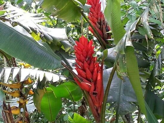 Mirador Valle del General : Blume 1