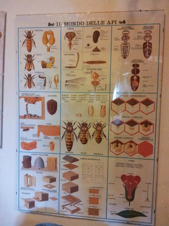Casa Museo dell'Apicoltore e Vendita di Miele: Cartellone esplicativo