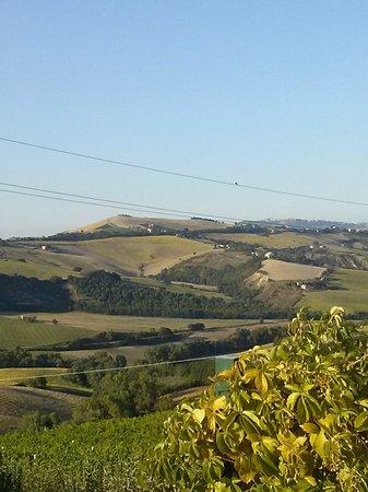 Agriturismo Fattoria Marchetti: vista valle