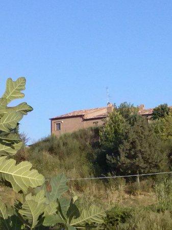 Agriturismo Fattoria Marchetti: vigneto vista fattoria