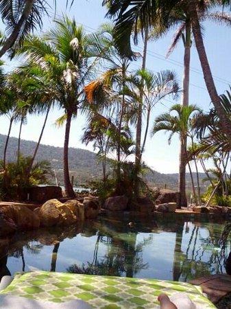 Colonial Palms Motor Inn: Pool