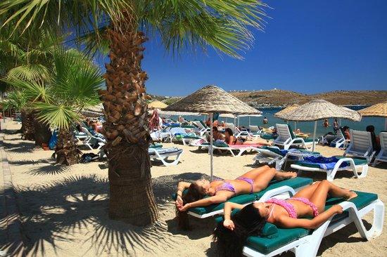 Magnific Hotel: beach