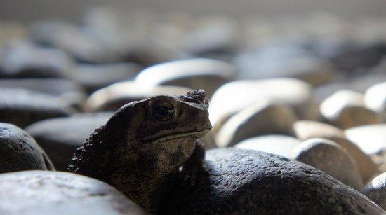 Vedana Lagoon Resort & Spa: a frog