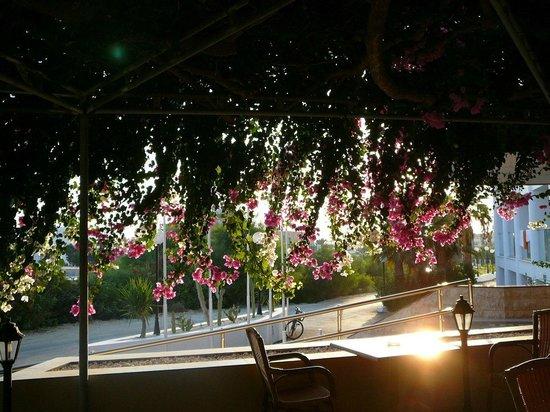 Corfu Hotel : Терраса
