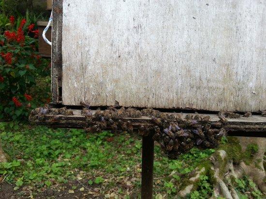 Ee Feng Gu Bee Farm: bees