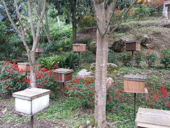 Ee Feng Gu Bee Farm: hives