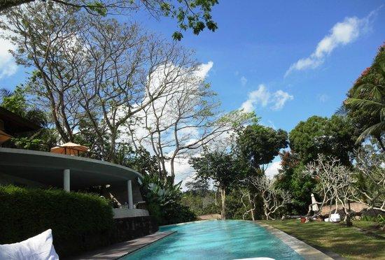 COMO Shambhala Estate: Main shared pool area