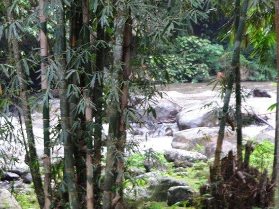 COMO Shambhala Estate: View of river at the bottom of the estate