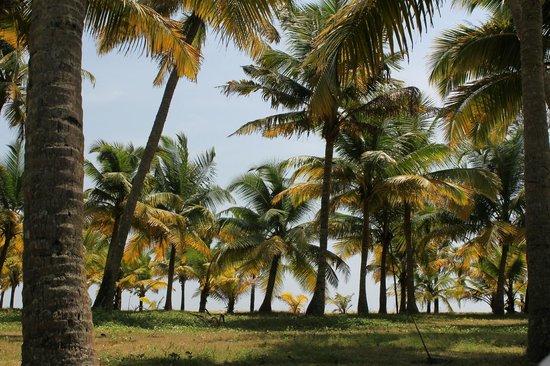 Marari Beach Resort : Garten