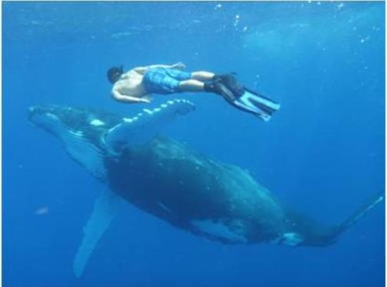 The Deep Resort: Plenty of whale swimming Aug-Sept