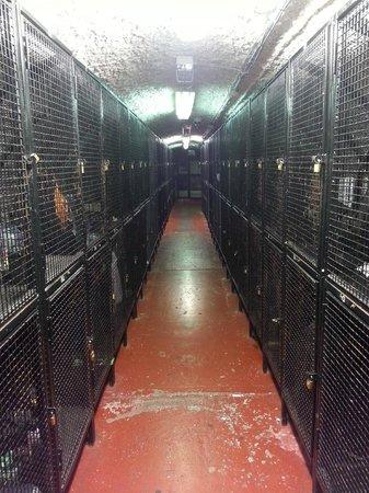 Isaacs Hostel: Lockers
