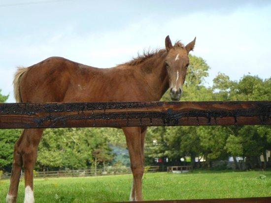 Cahergal Farmhouse: Friendly horse greeting us