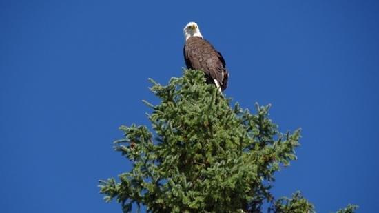 River Safari: un aigle oui ,mais pas d'ours