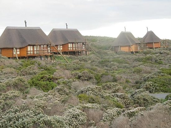 Agulhas Rest Camp: Looking at the chalets from the rear