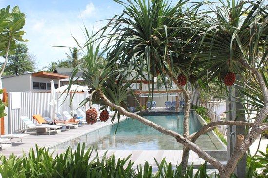 Synergy Samui Resort : pool side