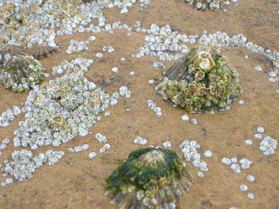 Long Sands Beach: Longsands Beach