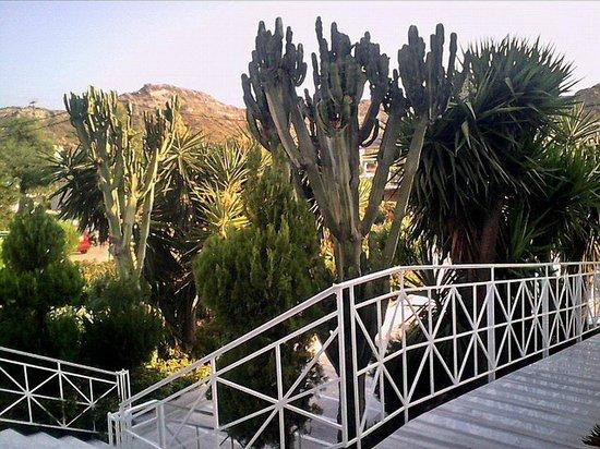 Faliraki Bay Hotel: Plants in front of the hote