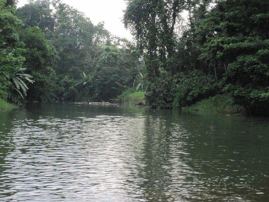 Tortuguero Wildlife Tour: River scene