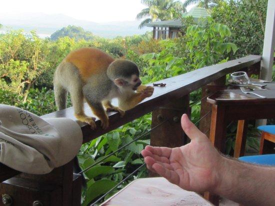 Tulemar Resort: Breakfast companions
