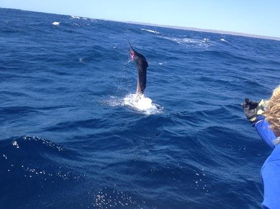 Peak Sportfishing Adventures: A 25kg sail fish in action, awesome experience