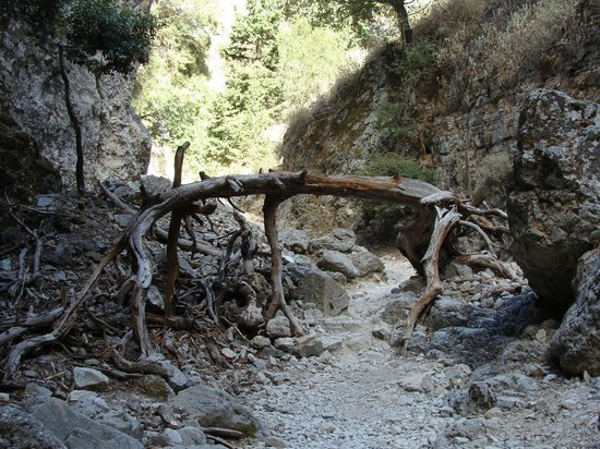Imbros Gorge: passage sous l'arbre mort