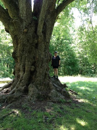 C & O Canal : I lOvE this tree!!!