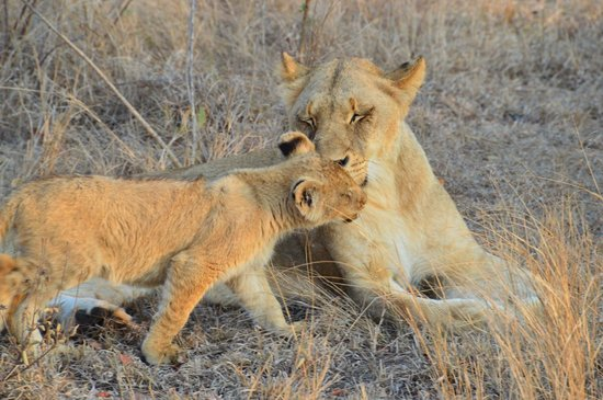 Londolozi Tree Camp: Mother and Cub