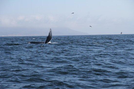 Avila Beach Boat Charters: whalewhatching