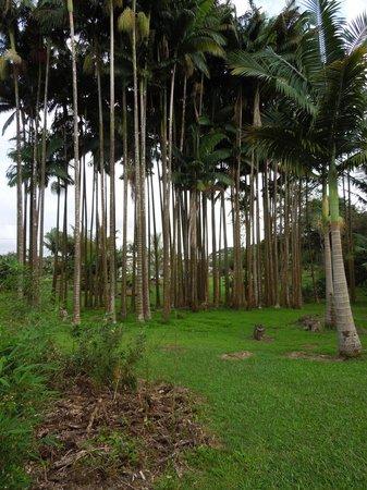 The Old Hawaiian B&B : garden