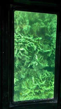 Kabira Marine Service : いろんな珊瑚があり驚きました。