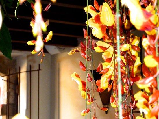 Hotel Cirilo : Flowers draping all along corridor