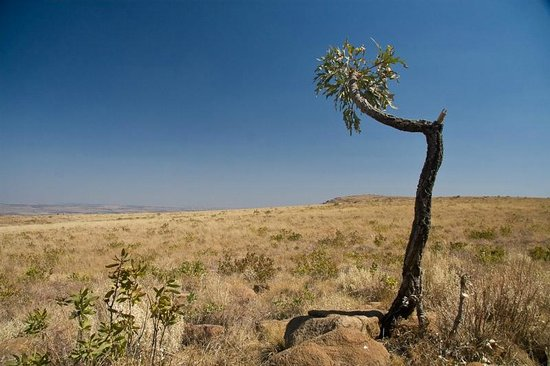 Mountain Sanctuary Park: Lone tree at the end of a long walk