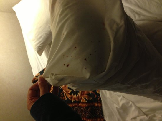 Marina Bay Inn & Suites : Large spots of blood found on the pillow