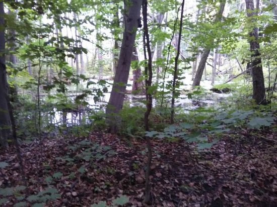 Parc-Nature-du-Bois-de-l'île-Bizard