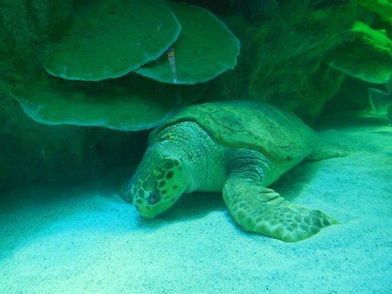 Fish Tank Picture Of New England Aquarium Boston