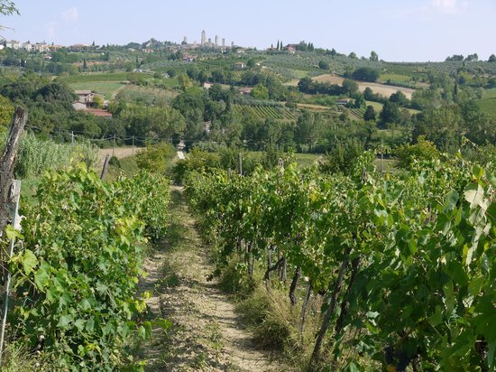 La Buca de Montauto: The vines of La Buca
