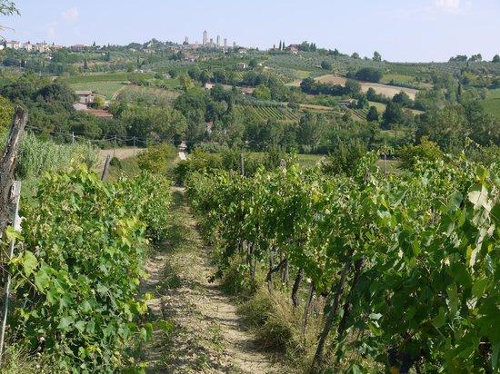 La Buca de Montauto: The vines of La Buca