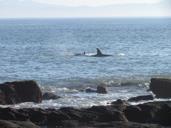 Juan de Fuca Marine Trail: Whales from the beach