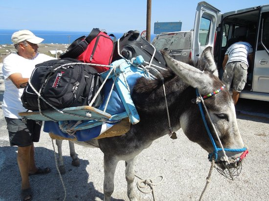 Georgis Apartments: Ucis (sp?) the donkey who totes your bags to the room