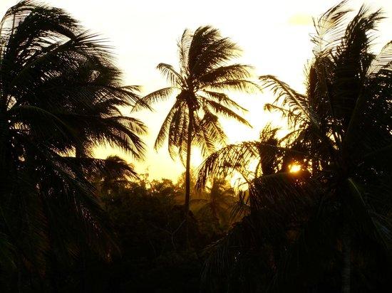 Robinson's Island: The beautiful palm trees on the island.