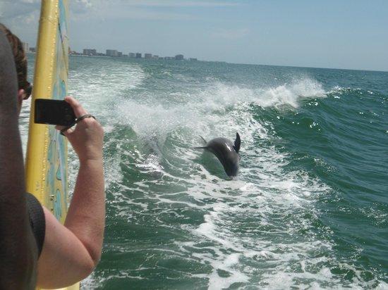 Sea Screamer: Dolphin jumping in the wake