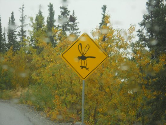 Denali Dome Home Bed and Breakfast : hilarious road signs 1