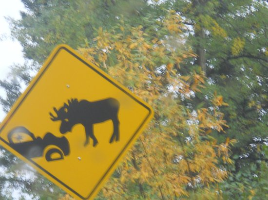 Denali Dome Home Bed and Breakfast: hilarious road signs 2