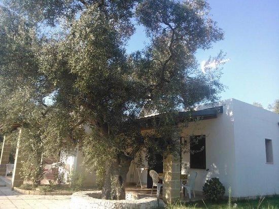 Residence Gli Ulivi : Gli alloggi
