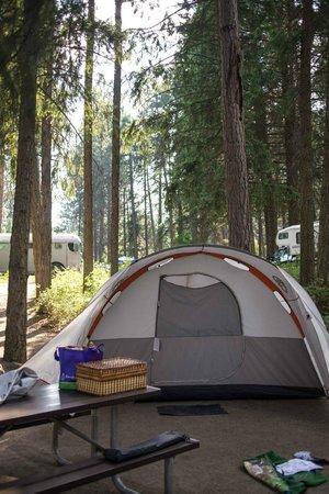 Farragut State Park: Campsite